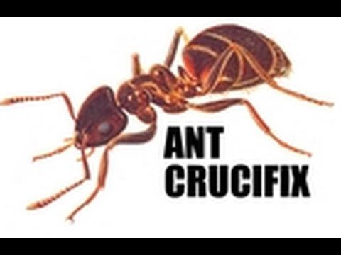 Penn Point - Ant Crucifix Censorship Controversy – Penn Point